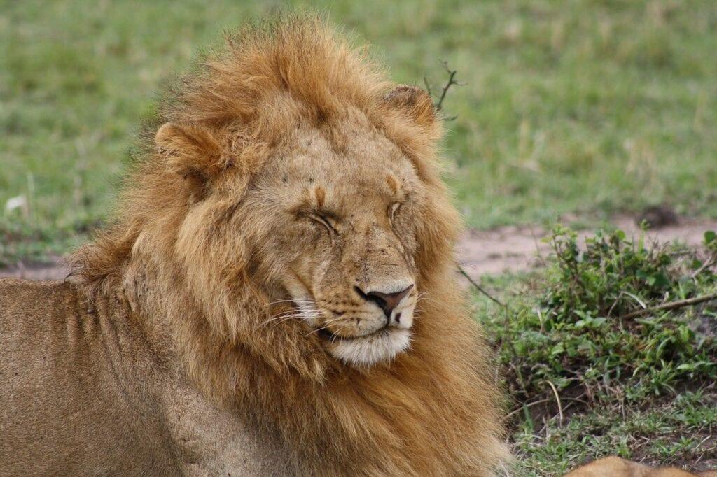 Safari in Masai Mara