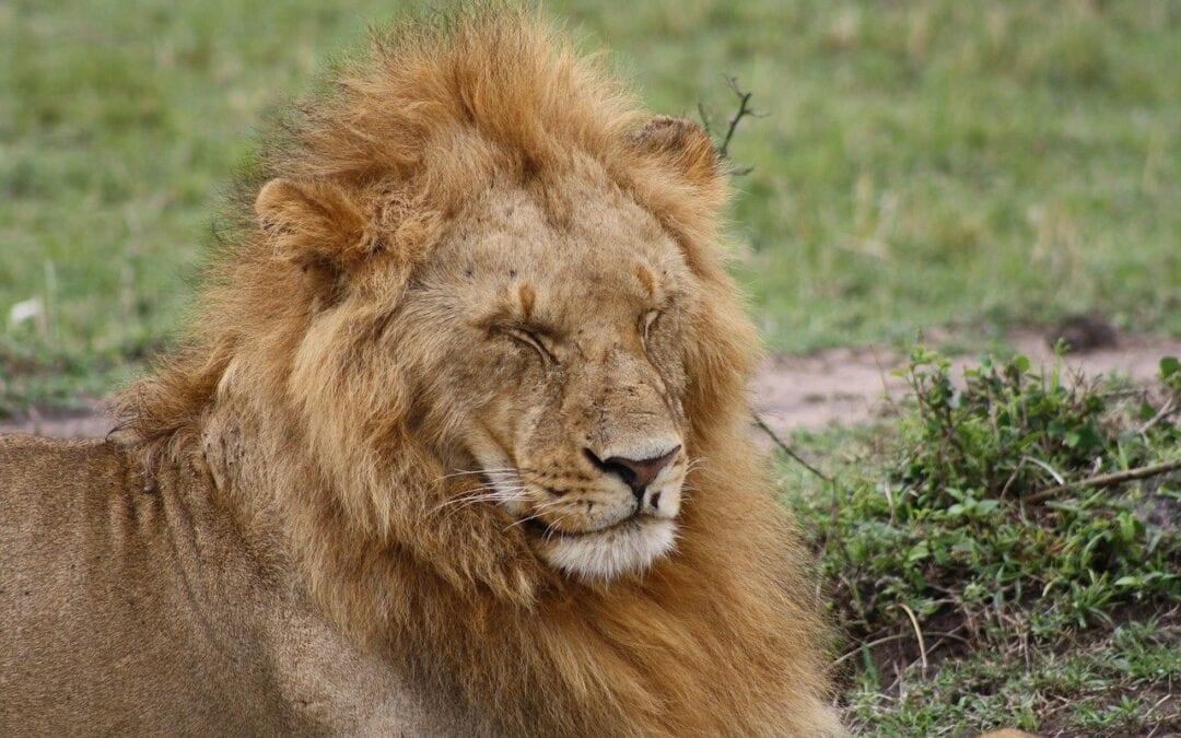 Safari in Kenya – Masai Mara National Reserve