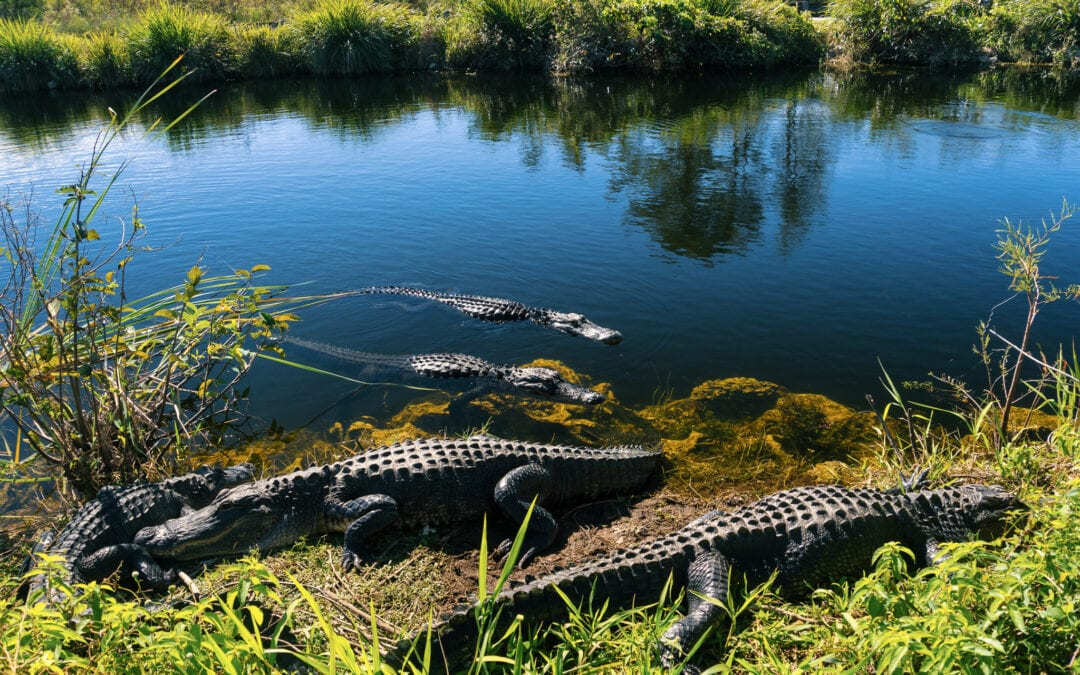 12 Best Hikes in the Everglades – Florida Hiking Trails