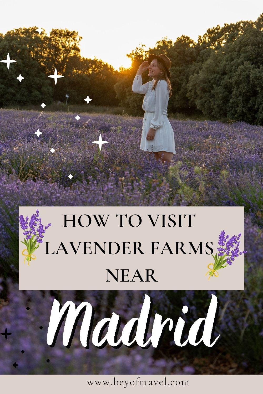 Brihueaga Lavender Farms