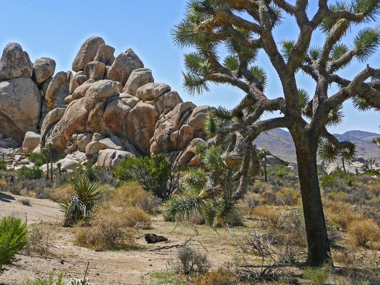 Most beautiful state US Joshua tree