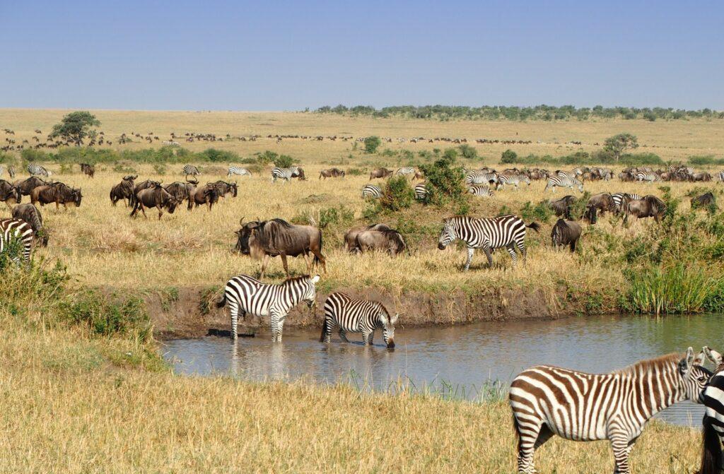 Best time to visit Masai Mara