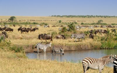 When is the best time to visit Masai Mara for safari